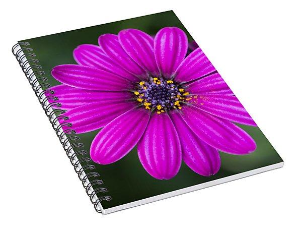 Pleasing Purple Spiral Notebook