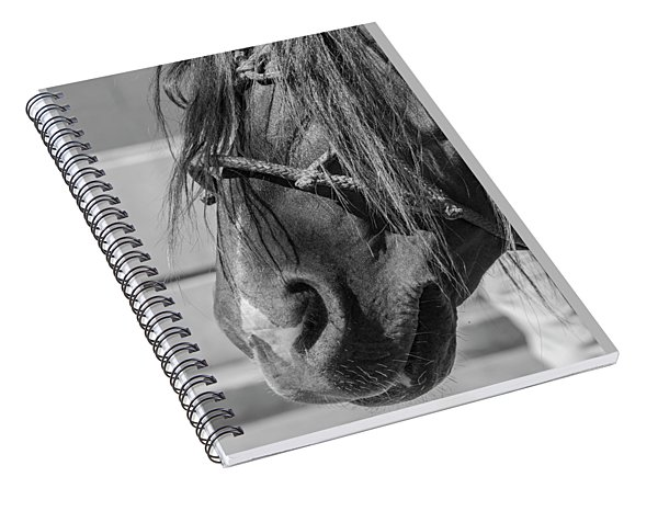 Portrait Of A Criollo, Argentina Spiral Notebook