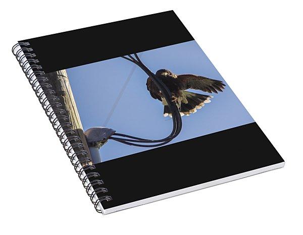 Ramona Hawk 8 Spiral Notebook