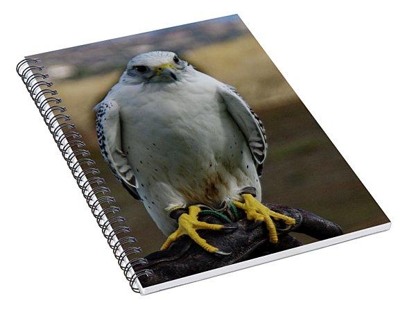 Ramona Hawk Watch 2 Spiral Notebook