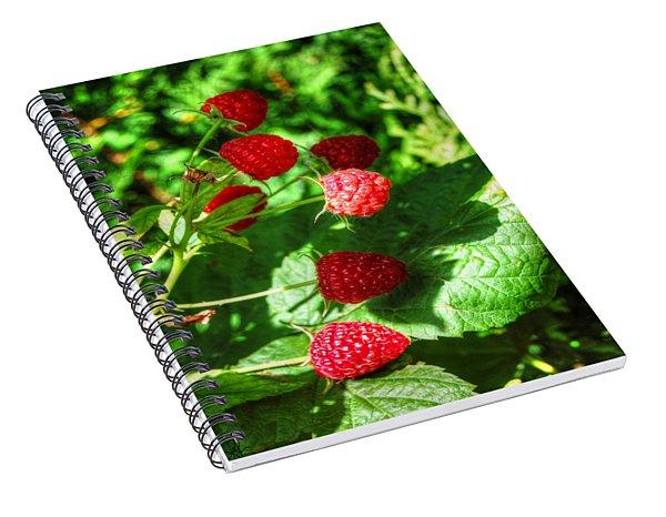 Raspberries Spiral Notebook