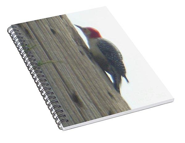 Red Bellied Woodpecker Spiral Notebook