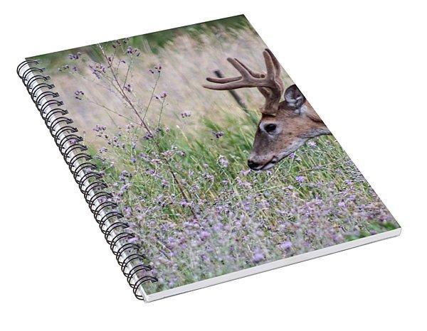 Red Bucks 4 Spiral Notebook