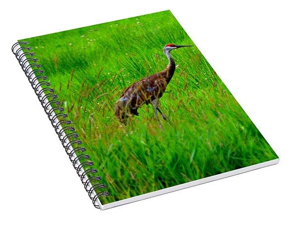 Regal Crane Spiral Notebook
