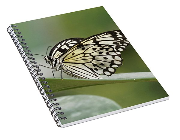 Rice Paper Butterfly - 2 Spiral Notebook