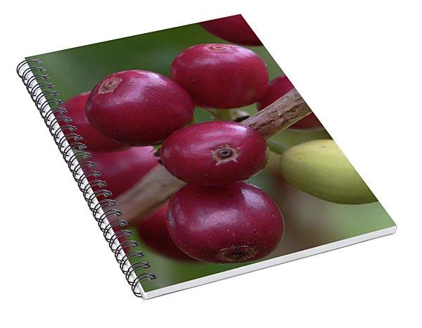 Ripe Kona Coffee Cherries Spiral Notebook