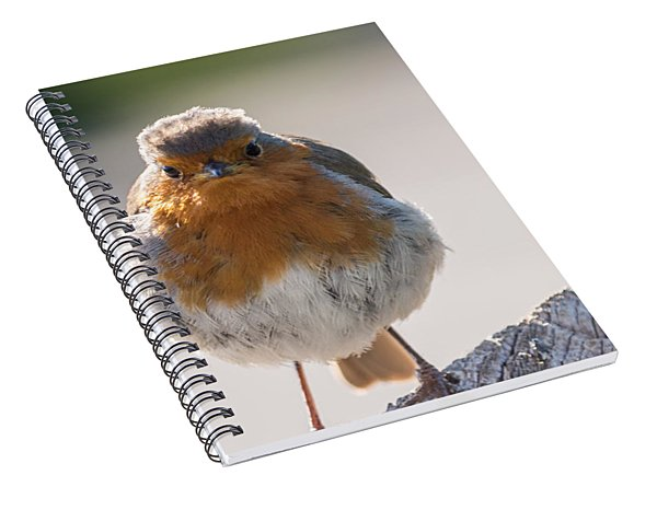 Robin Front Spiral Notebook