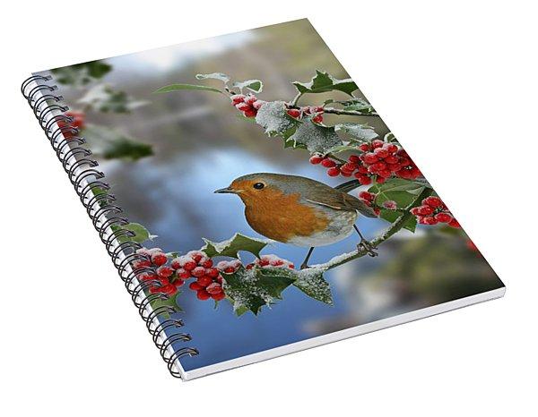 Robin On Holly Branch Spiral Notebook