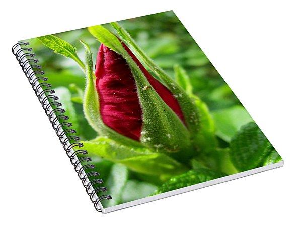 Rose Bud Spiral Notebook