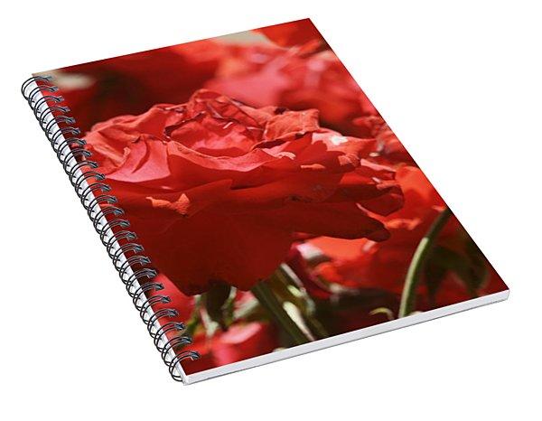 Roses 3 Spiral Notebook