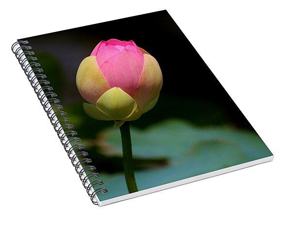 Sacred Lotus Bud 3 Spiral Notebook