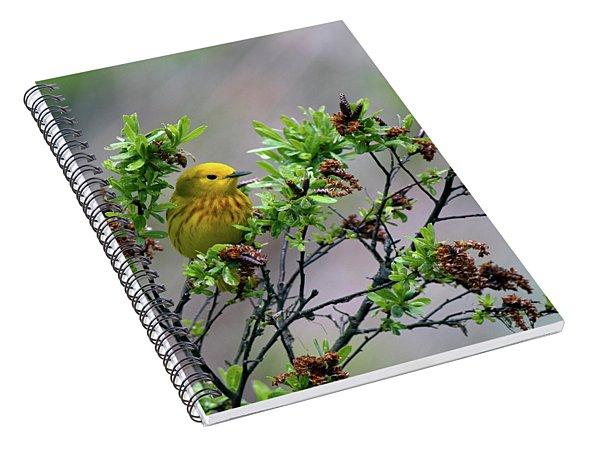 Safe Place Spiral Notebook