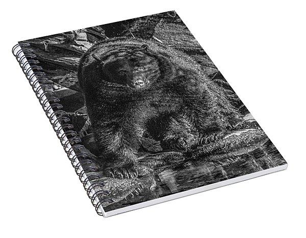 Salmon Seeker Black Bear  Spiral Notebook