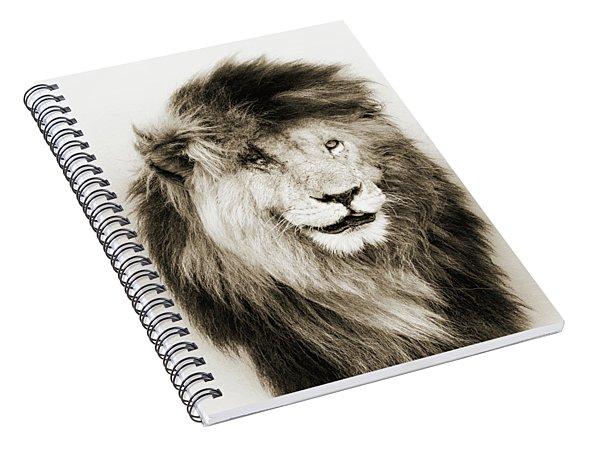 Scar Lion Closeup Square Sepia Spiral Notebook