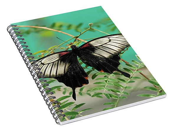 Scarlet Swallowtail Butterfly -2 Spiral Notebook