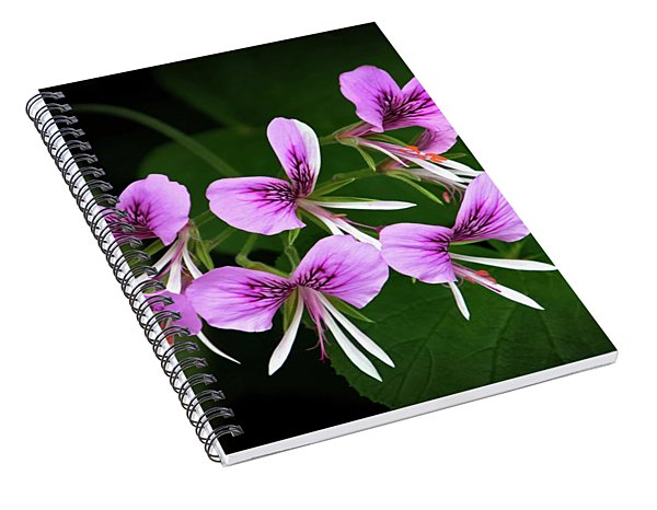 Scented-leaved Geranium  Spiral Notebook