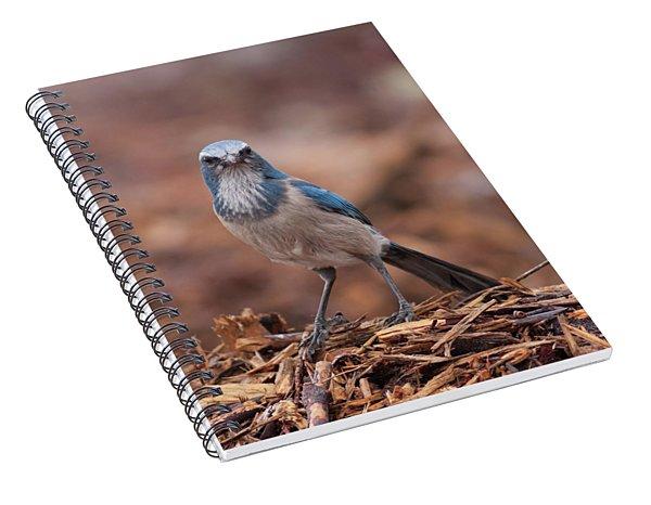 Scrub Jay On Chop Spiral Notebook