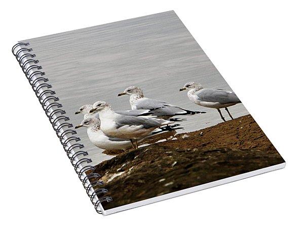 Sea Gulls On Rock Ledge Spiral Notebook
