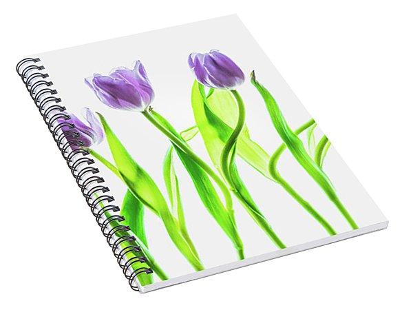 Seven Purple Tulips Spiral Notebook
