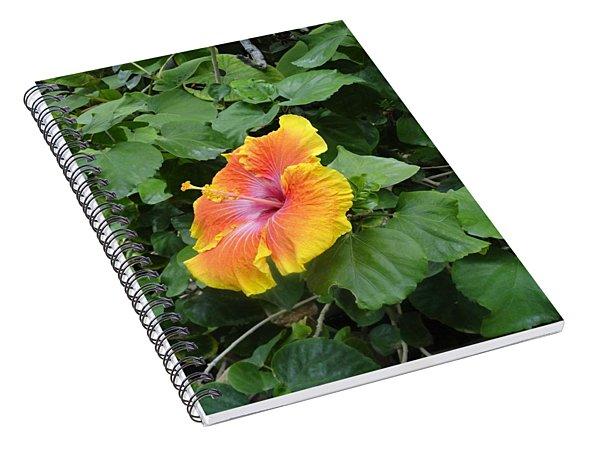Orange Yellow Flower Shoot Out Spiral Notebook