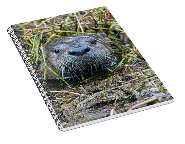 Shy River Otter Spiral Notebook