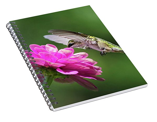 Spiral Notebook featuring the photograph Simple Pleasure Hummingbird by Christina Rollo