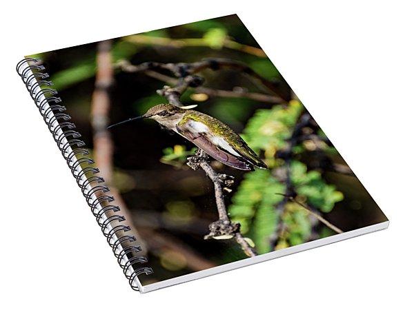 Sleepy Hummingbird Spiral Notebook
