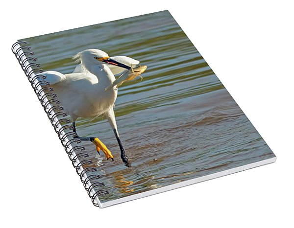 Snowy Egret With Fish 1213-111317-2cr Spiral Notebook
