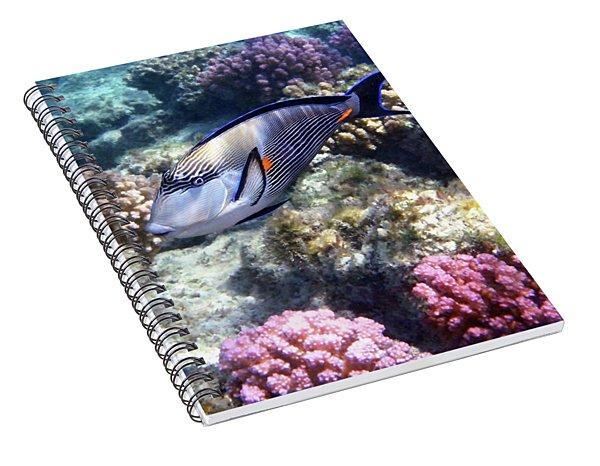 Sohal Surgeonfish 5 Spiral Notebook