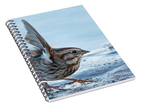 Song Sparrow 3426-112217-1cr Spiral Notebook