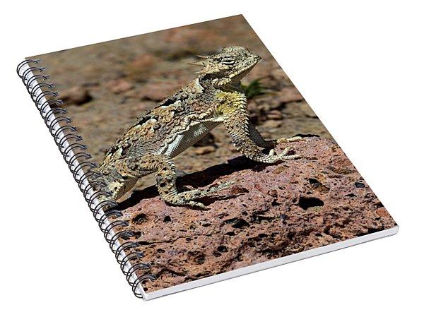 Southern Desert Horned Lizard Phrynosoma Platyrhinos Wild Spiral Notebook