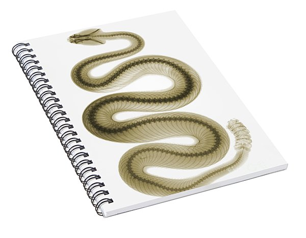 Southern Pacific Rattlesnake, X-ray Spiral Notebook
