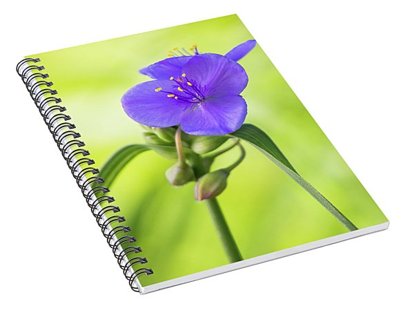 Spiderwort Wildflower Spiral Notebook