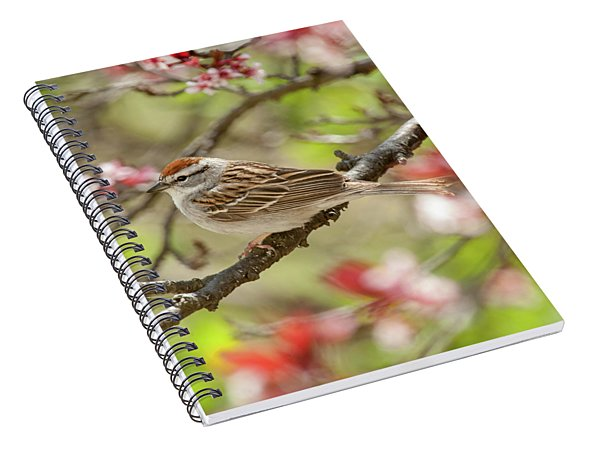 Spring Chipping Sparrow Spiral Notebook
