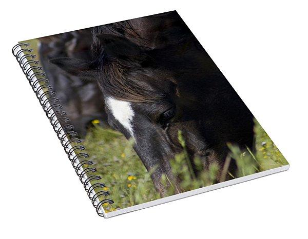 Horses Eating Spring Grass Spiral Notebook