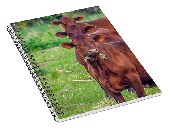 Stacked Up Cows          Spiral Notebook