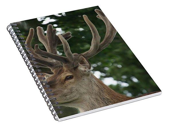 Stag Head. Spiral Notebook