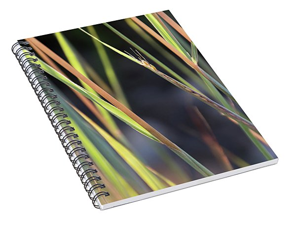 Still Emerging - Spiral Notebook