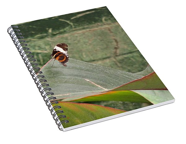 Striped Butterfly Come Alive Spiral Notebook