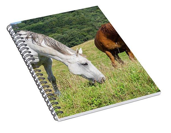 Summer Evening For Horses Spiral Notebook