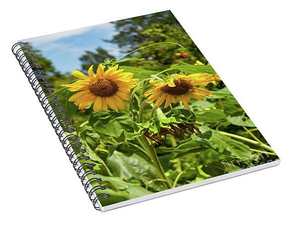 Sunflowers In Sunshine Spiral Notebook