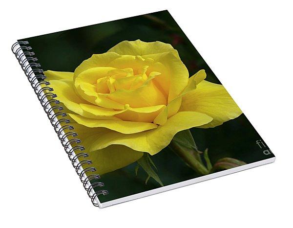 Sunsprite Rose 2 Spiral Notebook