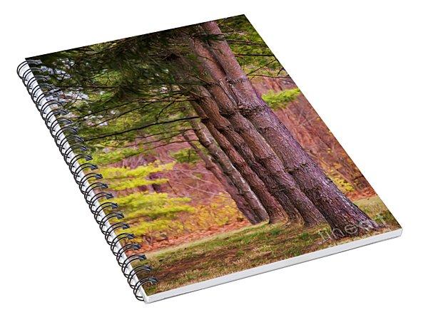 Tall Pines Standing Guard Spiral Notebook