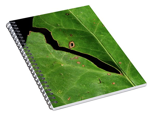 The Missing Gardener Spiral Notebook