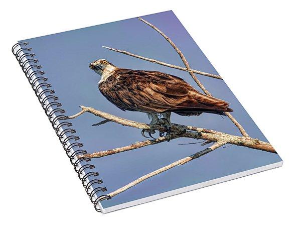 The Predator Spiral Notebook