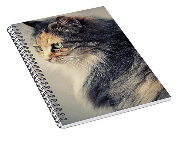The Sad Street Cat Spiral Notebook