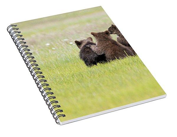 Three Cubs Watching Spiral Notebook