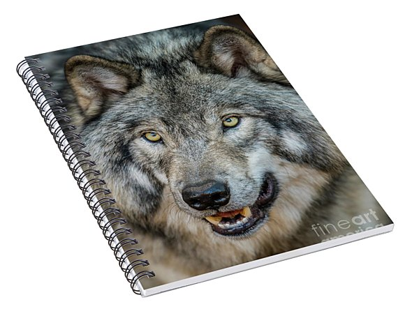 Timber Wolf Picture - Tw290 Spiral Notebook