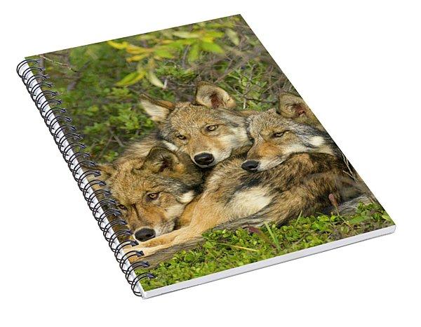 Timber Wolf Trio In Denali Spiral Notebook