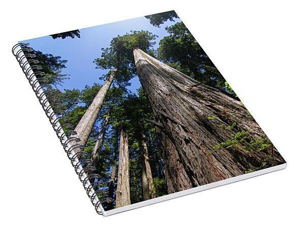Towering Redwoods Spiral Notebook